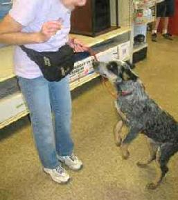 Jcms Professional Dog Training And Pet Boarding Facility